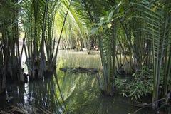 Djungel nära kanalen Royaltyfria Bilder
