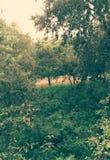 Djungel Natur Sidor Träd Arkivfoto