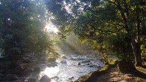 Djungel natur, vatten, vattenfall, tre arkivbilder