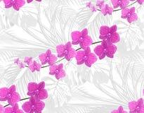 Djungel purpura orchids Mot bakgrunden av sidorna av tropiskt gömma i handflatan, monster, agaves seamless Isolerat på Arkivfoton