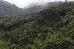 Djungel regnskog Royaltyfri Bild