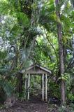 djungel som ska välkomnas Arkivbild