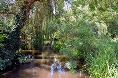 djungel som ska välkomnas arkivbilder