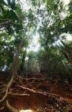 djungel som trekking Royaltyfria Foton