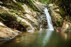 Djungel som trekking på Koh Phangan Royaltyfri Bild