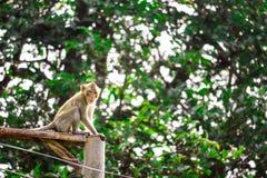 Djungelapor klättrar elektriska poler för att söka efter för att snöra åt och royaltyfri bild