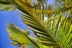 Djungelbakgrund av palmblad arkivbild
