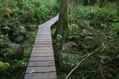 djungelbana till Royaltyfri Fotografi