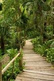 djungelbanor Royaltyfri Fotografi