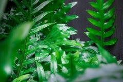 Djungelgrönska av tropiska gröna växter gör mycket för en trevlig design i din bakgård Denna härliga djungelgrönska med svart Arkivfoto