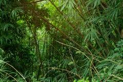 Djungelgrönska med kopieringsutrymmeområde och varmt fuktigt luftigt solljus som in uppifrån flödar Ny luft och gröna tropiska tr Arkivfoton