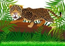 djungelleopard Arkivfoton