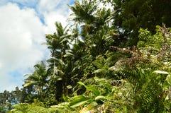 Djungeln av Hawaii badade vid de första strålarna av solen i morgonen Royaltyfria Foton