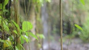 Djungelnatur Vattenfall och växter stock video