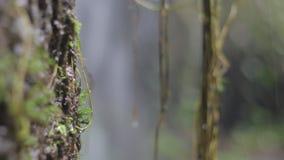 Djungelnatur Vattenfall och växter arkivfilmer