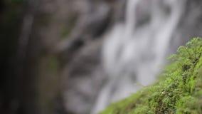 Djungelnatur Vattenfall och växter lager videofilmer