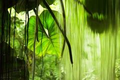 Djungelsikt, stora leaves och falla royaltyfri fotografi