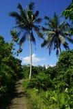 Djungelsiktsrisfält Bali med moln och palmträd Arkivfoton