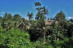 Djungelsiktsrisfält Bali med moln och palmträd Arkivbild