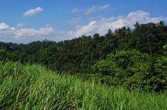 Djungelsiktsrisfält Bali med moln och palmträd Fotografering för Bildbyråer