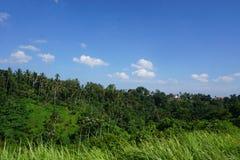 Djungelsiktsrisfält Bali med moln och palmträd Royaltyfri Foto