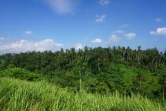 Djungelsiktsrisfält Bali med moln och palmträd Arkivbilder