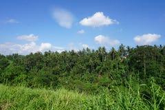 Djungelsiktsrisfält Bali med moln och palmträd Royaltyfri Fotografi