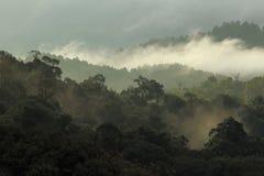 Djungelskog och berg med mist Arkivbild