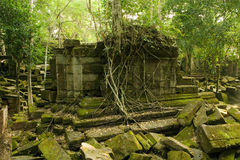 djungeltempel Fotografering för Bildbyråer