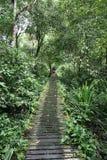 DjungelTrek i den Sarawak rainforesten arkivbild