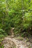djungelväg Fotografering för Bildbyråer