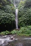 Djungelvandring i den Bali Indonesien mycket gröna växter och vattenfallet Fotografering för Bildbyråer