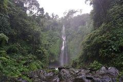 Djungelvandring i den Bali Indonesien mycket gröna växter och vattenfallet Royaltyfria Foton
