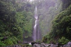Djungelvandring i den Bali Indonesien mycket gröna växter och vattenfallet Arkivbilder
