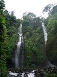 Djungelvandring i den Bali Indonesien mycket gröna växter och vattenfallet Royaltyfri Foto