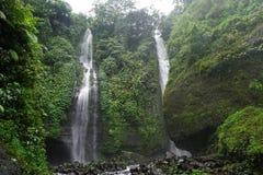 Djungelvandring i den Bali Indonesien mycket gröna växter och vattenfallet Royaltyfria Bilder