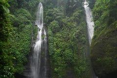 Djungelvandring i den Bali Indonesien mycket gröna växter och vattenfallet Royaltyfri Bild