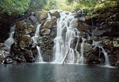 djungelvattenfall Royaltyfria Bilder