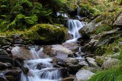 Djungelvattenfall Nya Zeeland Arkivbilder