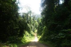 djungelväg Arkivbild