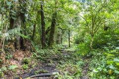 Djungle del Panama sulla traccia del quetzal Fotografie Stock