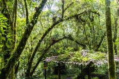 Djungle del Panama sulla traccia del quetzal Fotografia Stock