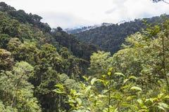 Djungle del Panama sulla traccia del quetzal Fotografie Stock Libere da Diritti