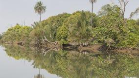 Djunglerna och floden Royaltyfria Bilder