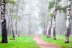 Djup dimma för höst i morgonbjörkdungen royaltyfria foton