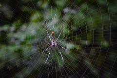 DJUP I SPIDER&EN x27; S-RENGÖRINGSDUK fotografering för bildbyråer