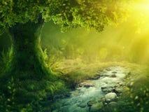 Djup magisk skog royaltyfria bilder