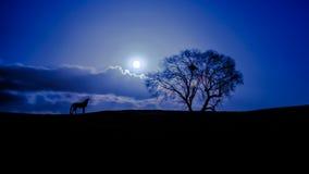 Djup natt Fotografering för Bildbyråer