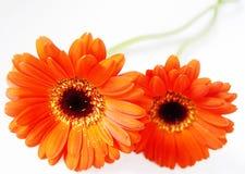 djup orange arkivfoton