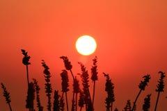Djup orange sol och himmel Royaltyfri Fotografi